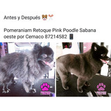 Grooming Dogs And Cats San Jose Costa Rica