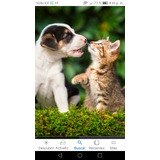 Quiero Adoptar Un Perrito O Perrita